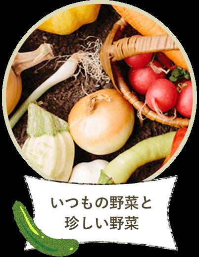いつもの野菜と珍しい野菜
